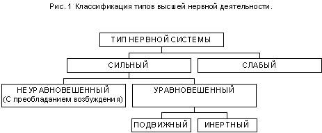 Типы нервной системы человека психология