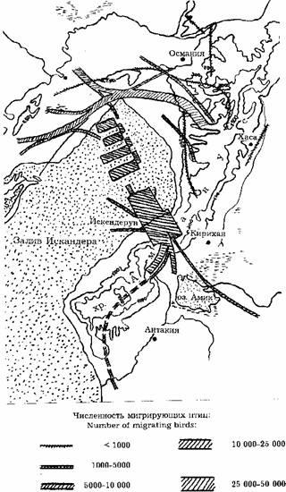 Это одна из ключевых точек на миграционных путях восточной популяции, и... Рис.2. Осенняя миграция белого аиста в...
