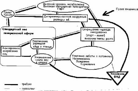 Схема взаимосвязи признаков в