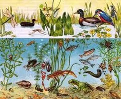 Любой природный водоем